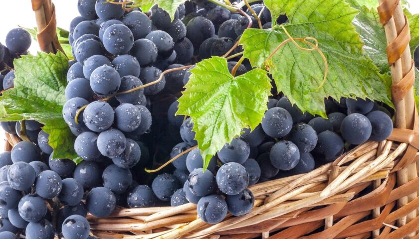 siyah üzüm çekirdeği